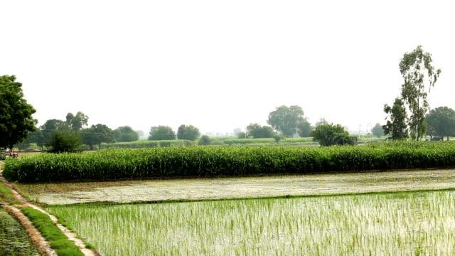 landsbygdens landskap panorering - haryana bildbanksvideor och videomaterial från bakom kulisserna