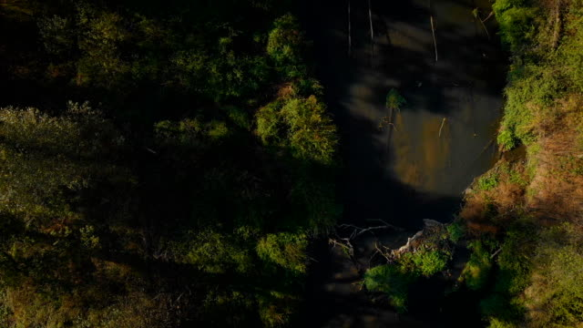 rural landscape with a small river (aerial view) video