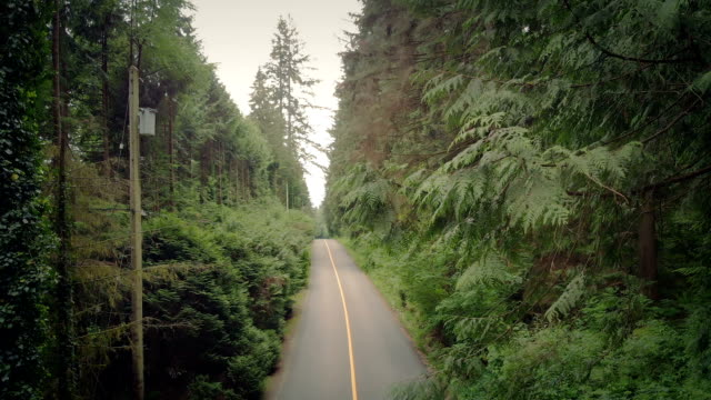 landstraße im sommer steigt schuss - vancouver kanada stock-videos und b-roll-filmmaterial