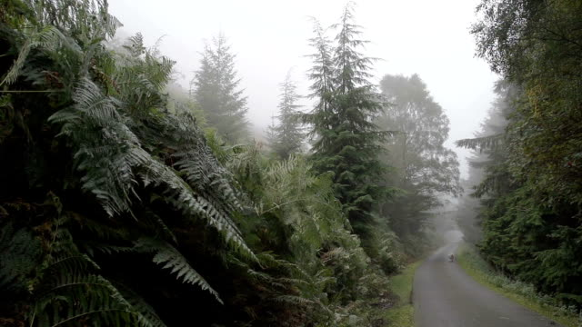 Rural Road Throgh Misty Morning Forest video