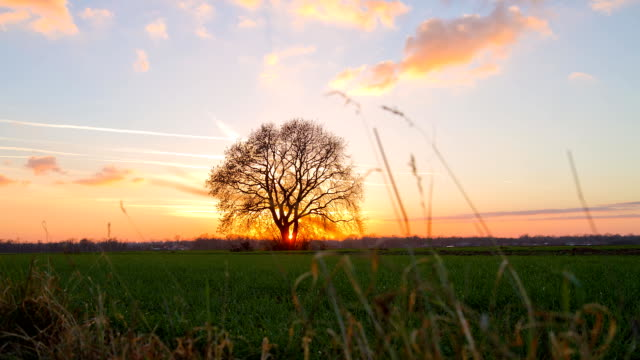 HD MOTION TIME-LAPSE: Rural Scene At Sunset