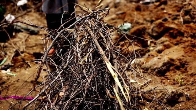 Rural women cutting woods video