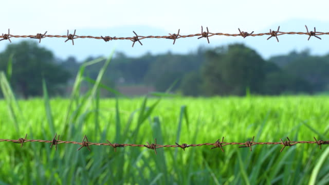 vídeos y material grabado en eventos de stock de alambres de púas oxidados - valla límite