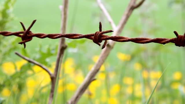 rusty barbwire in the field video
