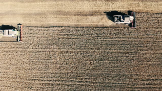 Rye is getting mechanically harvested in straight lines in a top view Rye is getting mechanically harvested in straight lines in a top view. 4K monoculture stock videos & royalty-free footage