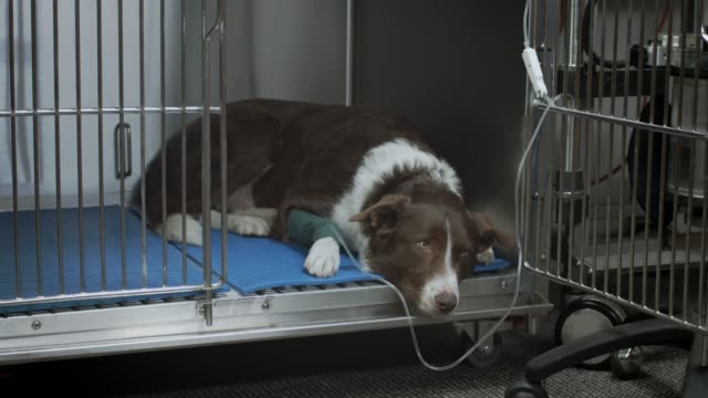Sad Dog at the Vet video