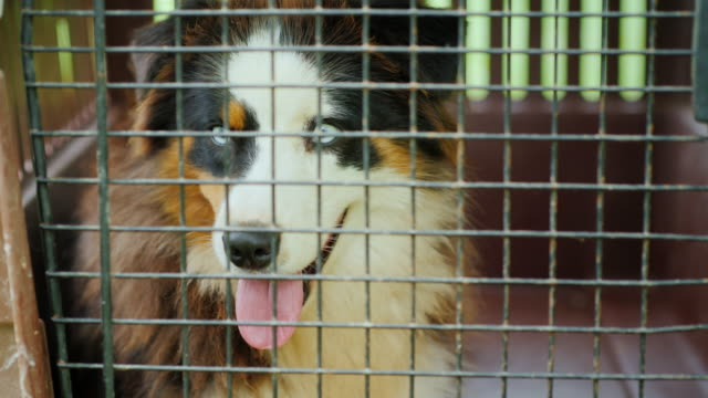 A sad dog sits in a small cage for transportation video