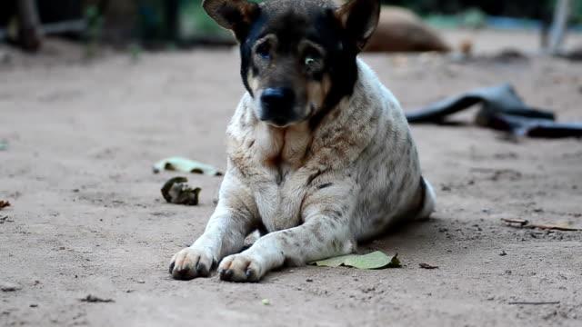 sad Dog sad Dog flea insect stock videos & royalty-free footage