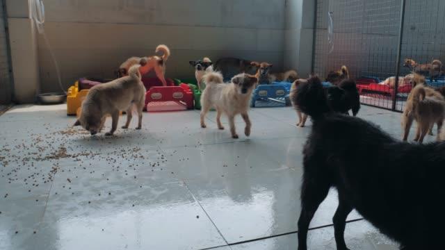 traurige hunde in flüchtlingsunterkünften hinter dem zaun, die darauf warten, gerettet und in ein neues zuhause adoptiert zu werden. tierschützer konzept - käfig stock-videos und b-roll-filmmaterial