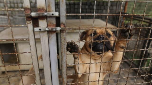 traurige hunde in schutz hinter zaun warten darauf, gerettet und in ein neues zuhause adoptiert zu werden - käfig stock-videos und b-roll-filmmaterial