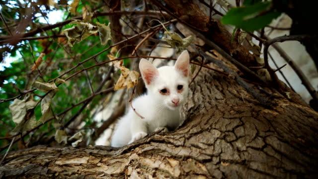 vídeos de stock, filmes e b-roll de gatinho triste no galho - felino
