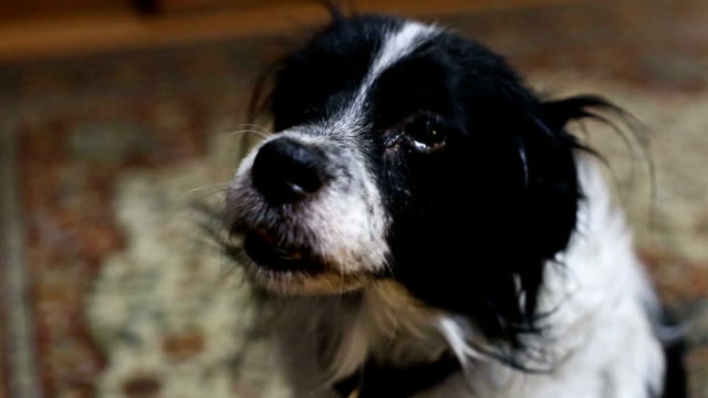 sad look an old dog sad look an old dog hound stock videos & royalty-free footage