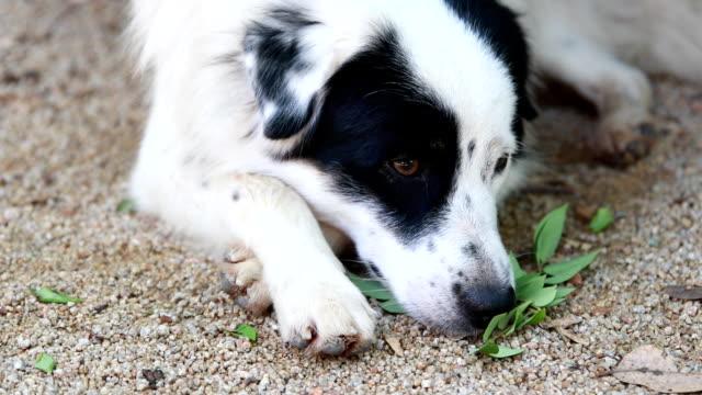 Sadness dog