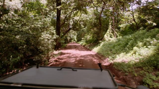 Safari jeep driving Safari jeep driving in Tanzania tanzania stock videos & royalty-free footage