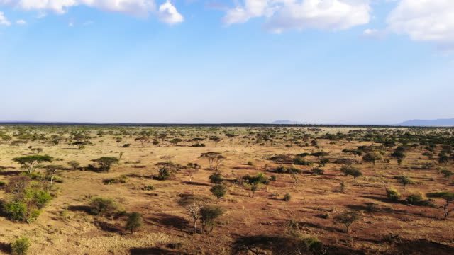 Safari journey through the African Savannah. Aerial shot of traditional African rural tribe village.  Dry Season in South Africa. Aerial footage savannah grassland landscape in national park. Aerial footage savannah grassland landscape in national park. tanzania stock videos & royalty-free footage