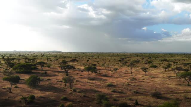 safari-reise durch die afrikanische savanne. luftaufnahme des traditionellen afrikanischen landstammesdorfes. trockenzeit in südafrika. - savanne stock-videos und b-roll-filmmaterial