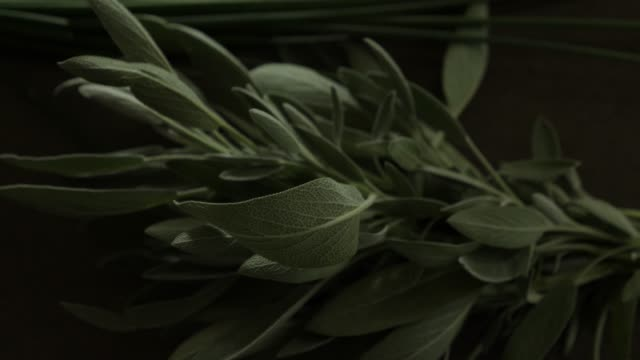 Sage spice plant leaves indoors video