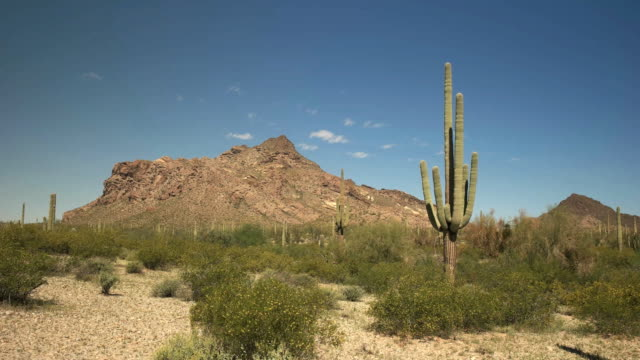 サグアロ サボテンとツイン ・ ピークス ajo、アリゾナの近く - オコティロサボテン点の映像素材/bロール