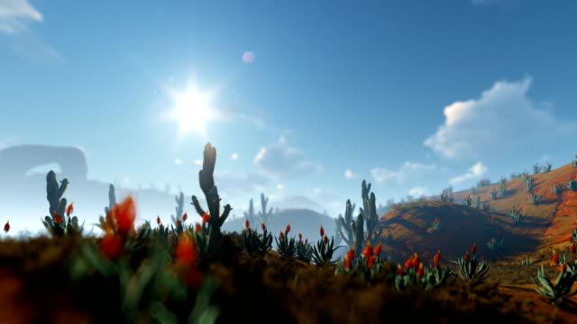 saguaro cactus in der wüste, kamera panning, 4k - südwesten stock-videos und b-roll-filmmaterial