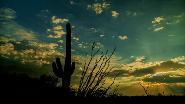 Saguaro Cactus Sunset video