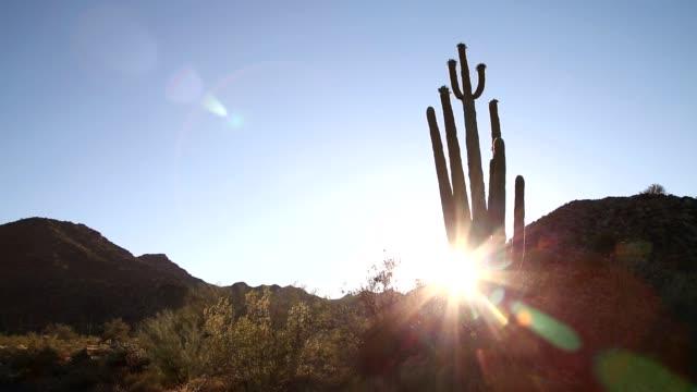 アリゾナ州の夕日とベンケイ サボテン - オコティロサボテン点の映像素材/bロール