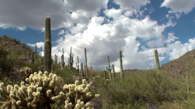 saguaro cloud time lapse - hd format bildbanksvideor och videomaterial från bakom kulisserna