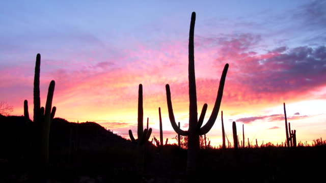 Saguaro Sunrise video