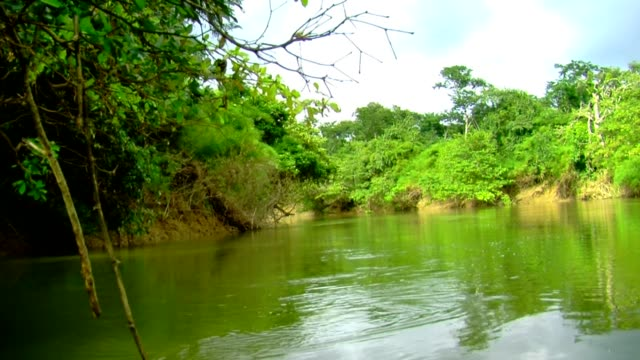 Sailing on a river in the rainforest video
