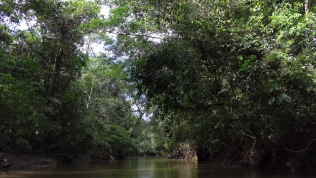 Sailing on the Cuyabeno reserve of amazon basin. video