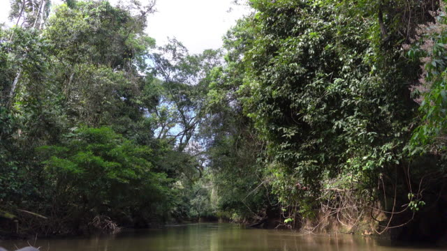 Sailing on the Cuyabeno reserve of amazon basin. video