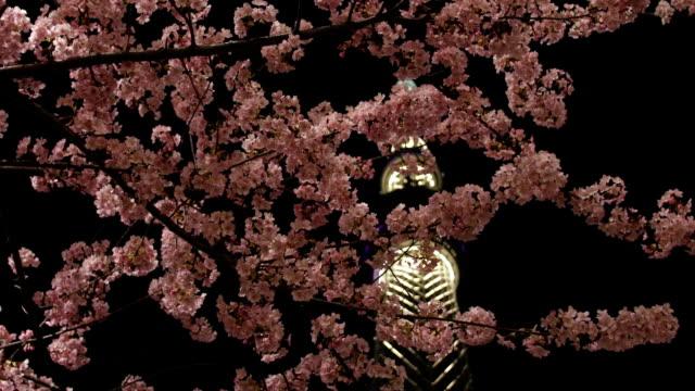 桜、東京 Nightscape ビデオ