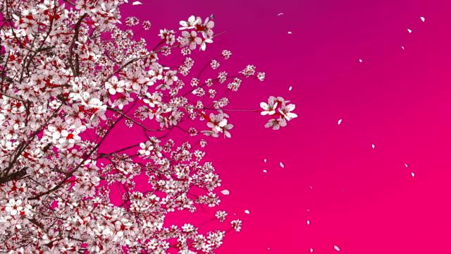 3d sakura cherry tree blossom och fallande kronblad - blommönster bildbanksvideor och videomaterial från bakom kulisserna
