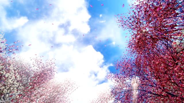 Sakura flowers and falling petals at sunlight video