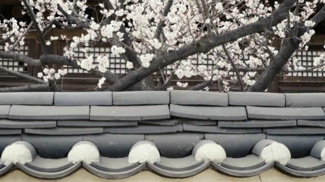 Sakura tree behind the temple wall
