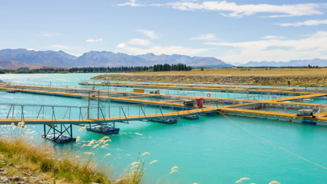 Salmon farms, New Zealand video