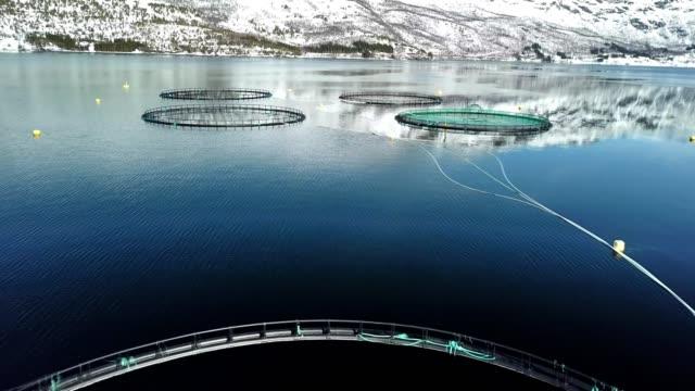 lachsfischerei in nordior - fische und meeresfrüchte stock-videos und b-roll-filmmaterial