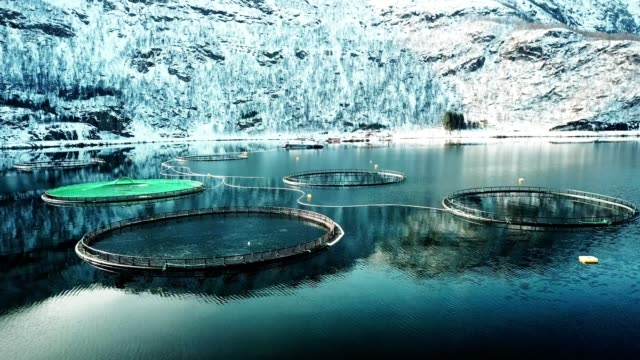 vídeos de stock e filmes b-roll de salmon fishing farm in norway - aquacultura