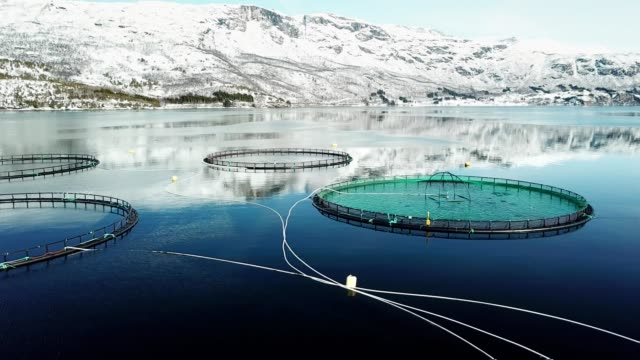 Lachs Angeln Bauernhof in Norwegen – Video