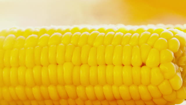 Salting freshly cooked boiled corn cob close-up shot video