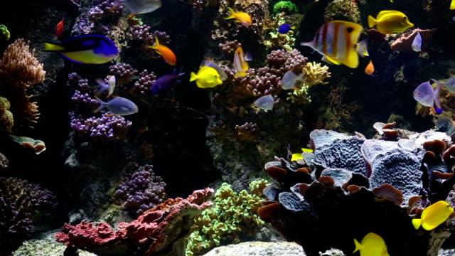 saltwater fishes - akvaryum stok videoları ve detay görüntü çekimi