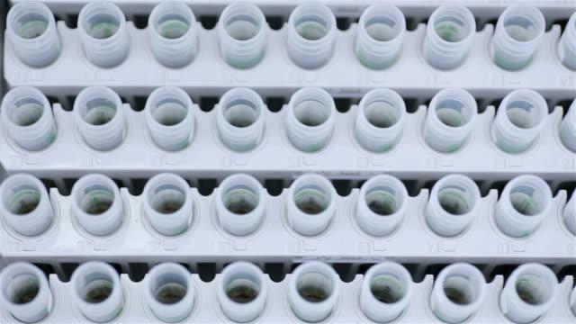 prover i provrör - test tube bildbanksvideor och videomaterial från bakom kulisserna