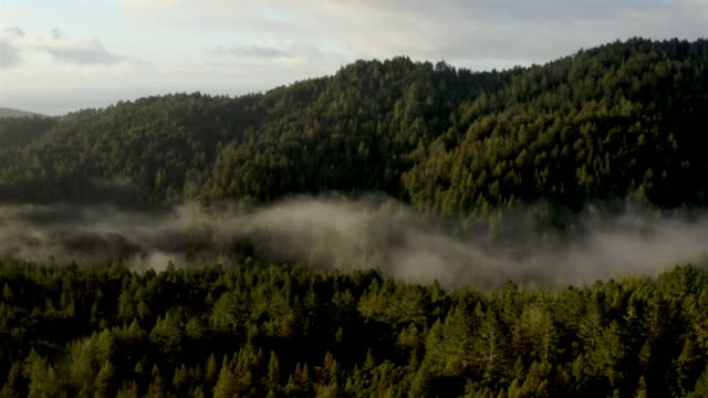 San Francisco bay: Redwood Forest early in the morning: aerial