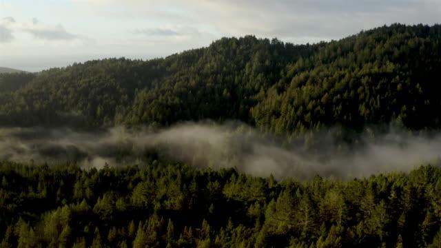 bucht von san francisco: redwood forest am frühen morgen: luft - staatspark stock-videos und b-roll-filmmaterial