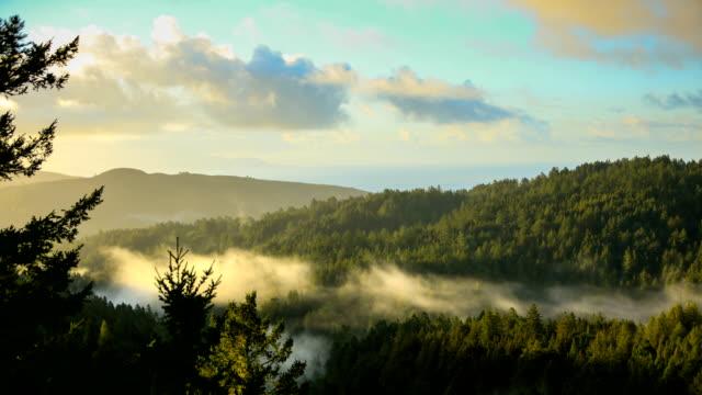 baia di san francisco: foresta di sequoie la mattina presto - paesaggio collinare video stock e b–roll