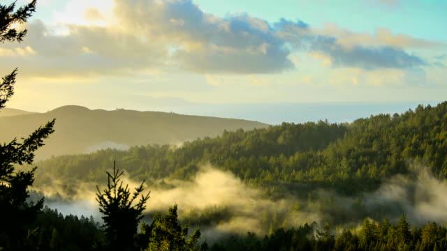 baia di san francisco: foresta di sequoie la mattina presto - riserva naturale parco nazionale video stock e b–roll