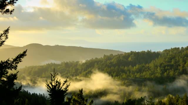 San Francisco bay: Redwood Forest