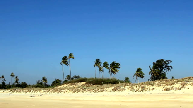 sand beach with palm trees video