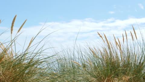 kum tepeleri ve sazlık mavi gökyüzü bulutlu. sm. - rüzgar stok videoları ve detay görüntü çekimi