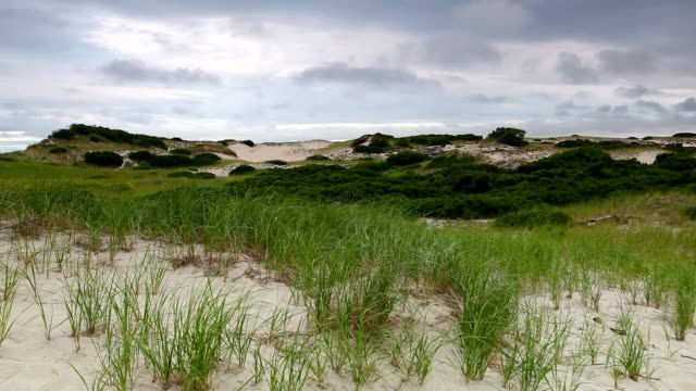 Sand dunes beach on the Cape Cod video