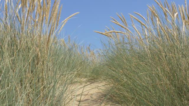 Sand dunes, blue sky and Marram grass.